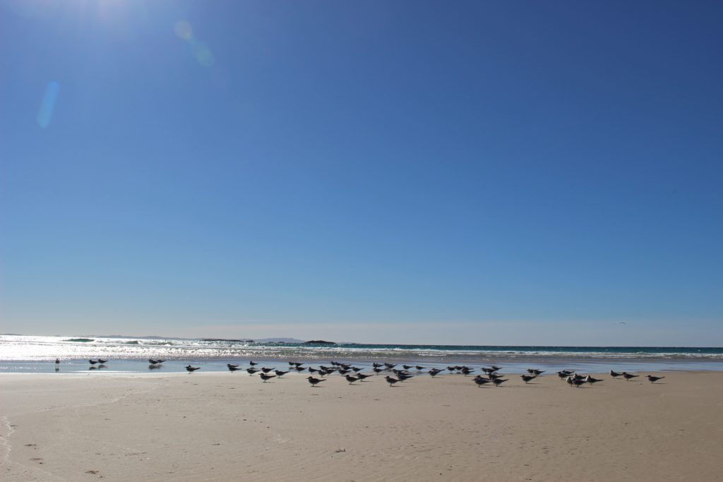 サイリンダービーチ