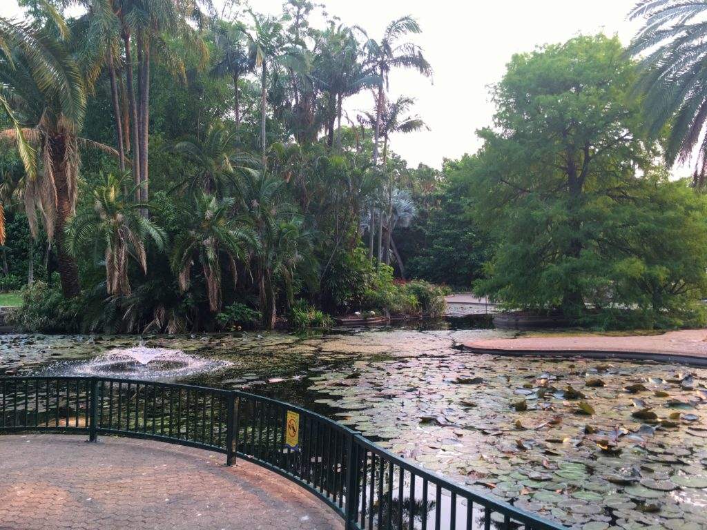 ブリスベンシティボタニックガーデン(Brisbane City Botanic Garden))
