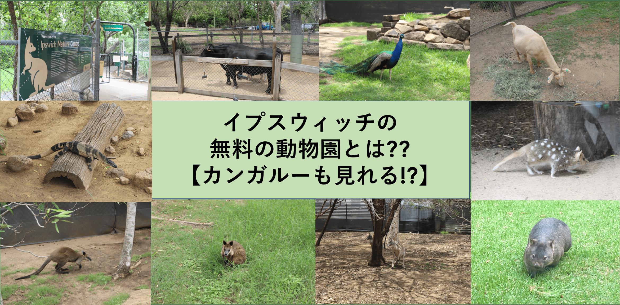 イプスウィッチの無料の動物園とは??【カンガルーも見れる!?】